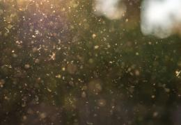dust/pollen in the air