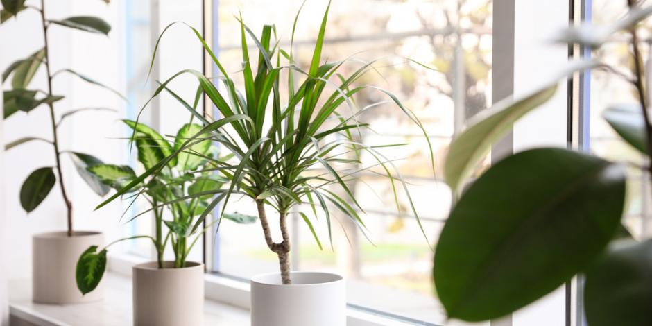 potted plants near window in house